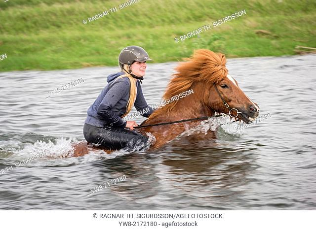 Teenager horseback riding in the sea. Icelandic horse and rider at Longufjorur beach, Snaefellsnes Peninsula, Iceland