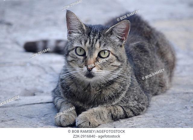 Little cat lying on the floor in Kotor city in Montenegro