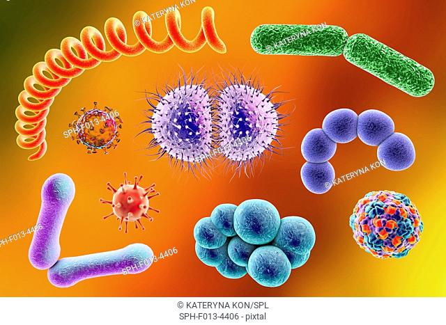 Microbes. Computer illustration of a microbial mixture containing bacteria and viruses of different types
