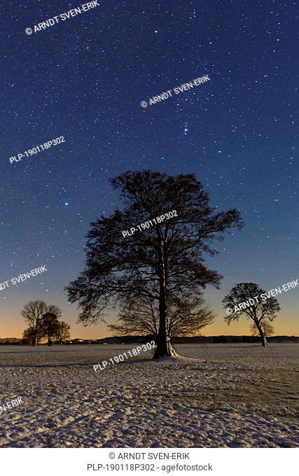 Trees in meadow at night in winter at the Biosphere Reserve Biosphärenreservat Flusslandschaft Elbe, Elbtalaue, Niedersachsen / Lower Saxony, Germany