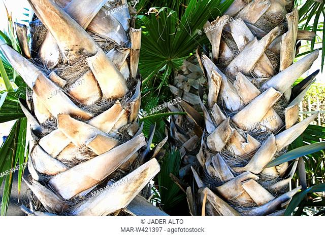 palm trees, close up