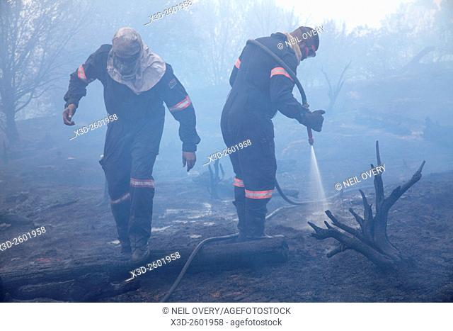 Firefighters extinguishing forest fire, Table Mountain National Park, South Africa