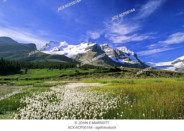 Mt Athabasca and the Columbia Icefields, Jasper National Park, Alberta, Canada