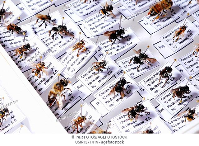 Insects pinned in small unity trays, Acre, Brazil, 2009