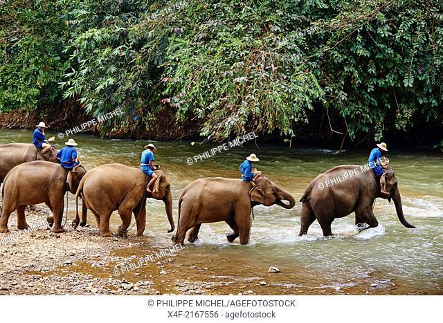 Thailand, Chiang Mai, Chiang Dao, elephant training