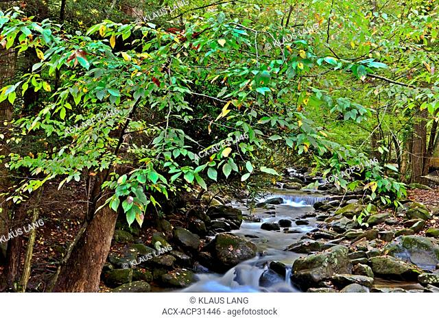 Roaring Fork Creek, Great Smoky Mountain National Park, Tennessee, USA