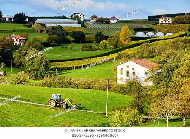 Agriculture and vineyards of Txakoli, Autumn, Askizu Auzoa, Getaria, Gipuzkoa, Basque Country, Spain, Europe