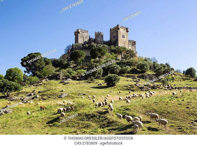 The impressive eighth-century castle of Almodovar del Rio perches high above the Guadalquivir river valley. In the foreground a flock of sheep