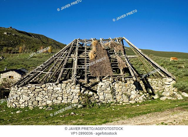 Old abandoned palloza in the high pastures of Campo del Agua. The Ancares. Lion. Castilla y León. Spain