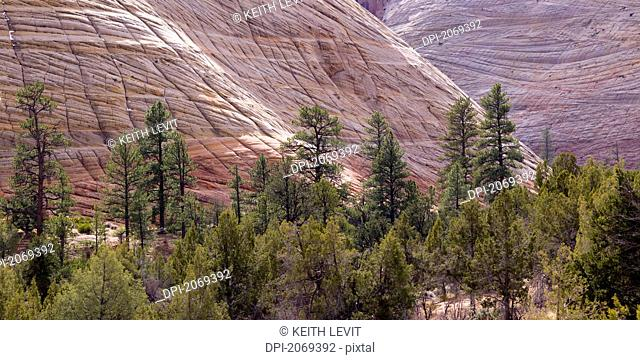 Rock Cliffs And Trees In Zion National Park, Utah United States Of America