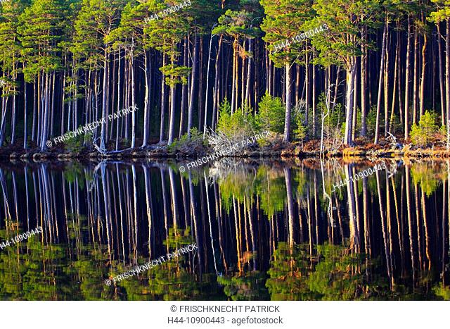 Tree, trunk, trunks, birch, birches, trees, Cairngorms, pine, jaw, pines, pine wood, Loch, mixed forest, pattern, national park, park, Pinus sylvestris