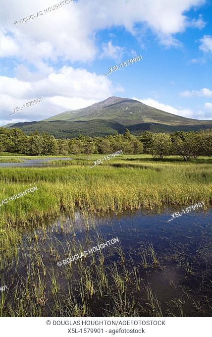 Mountain Schiehallion DUNALASTAIR WATER PERTHSHIRE Trees loch marshy grass lochside and mountain range