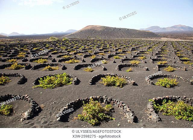 La Geria area, Lanzarote island, Canary archipelago, Spain, Europe
