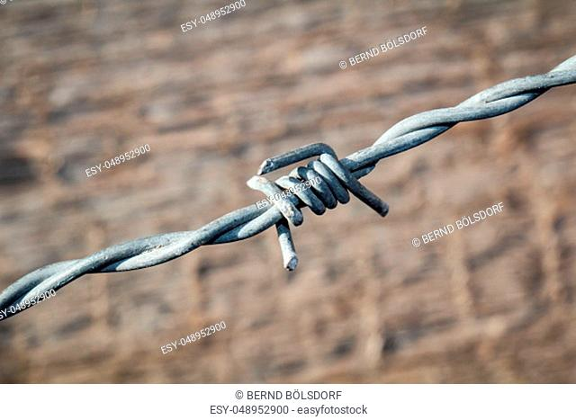 a detail of a barbed wire