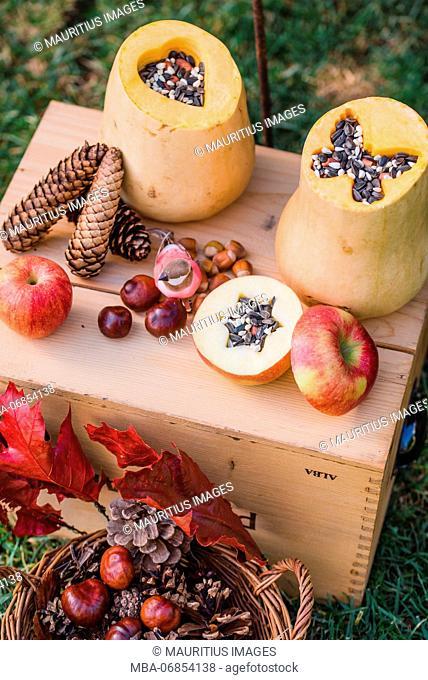 Garden, DIY, self-made bird feeder, pumpkins, apples, box, detail