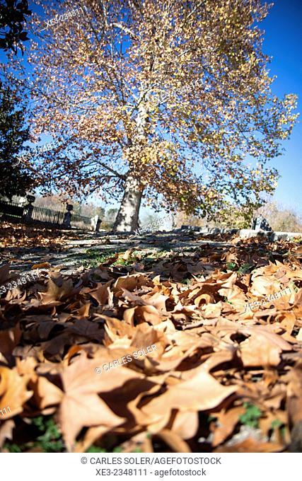 Hojas caídas, Aranjuez