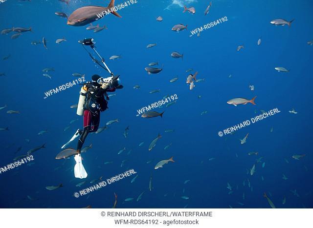 Scuba Diver and Pacific Creolefish, Paranthias colonus, Socorro, Revillagigedo Islands, Mexico