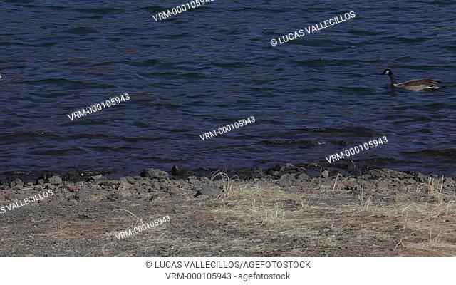 Kawaguchi Lake,Kawaguchiko,Yamanashi prefecture, Japan