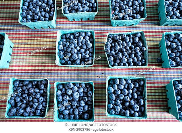 New York City, Manhattan. Pint Paper Containers of Freshly Picked Blueberries, Displayed on a Gingham Cloth and Offered for Sale in an Outdoor Market