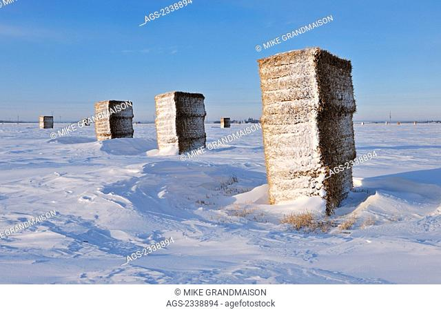 Agriculture - Large rectangular hay bales stacked up in a snow covered field during Winter / near Dugald, Manitoba, Canada