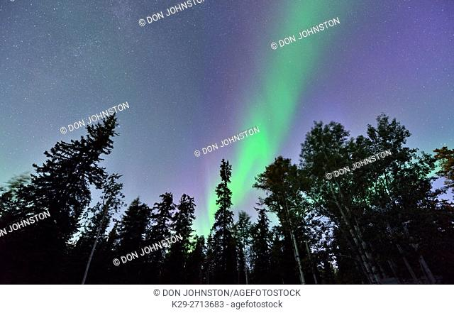 Aurora borealis and boreal trees, Twin Falls Territorial Park, Northwest Territories, Canada