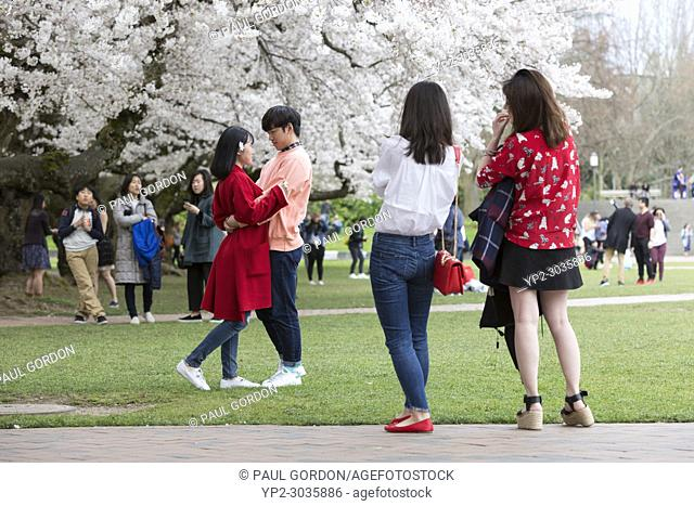 Seattle, Washington: A young couple pose for a photo during the blooming off the cherry trees at the University of Washington