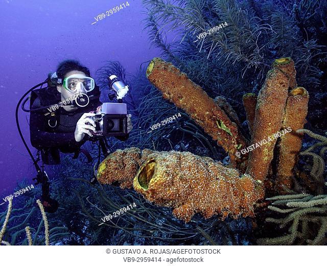 Caribbean Sea Los Roques, woman Scuba-Diver underwater photographer Tour, Underwater, Venezuela, Yellow Tube Sponge -Aplysina fistularis-