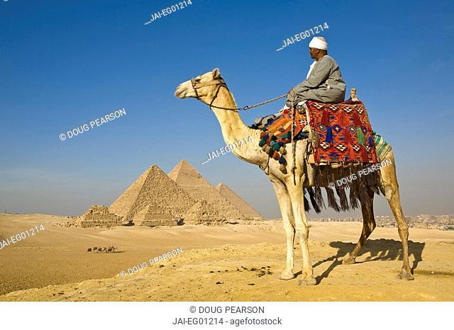 Camel & driver at the Pyramids, Giza, Cairo, Egypt