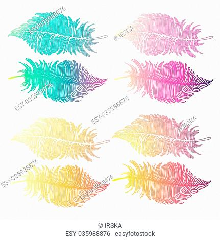 beautiful vector illustration of colored Boho feathers