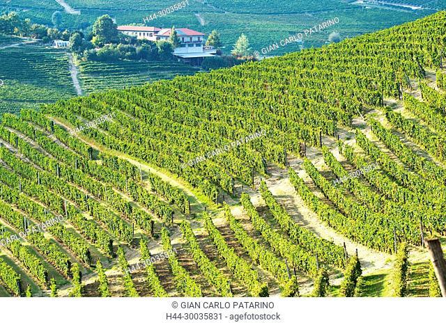 Italy, panorama of vineyards of Piedmont Langhe-Roero and Monferrato on the World Heritage List UNESCO Italy, Piedmont, Vineyards
