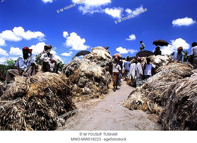 A jute market in Manikganj, Bangladesh Jute is known as the golden fiber of Bangladesh Eighty percent of the world's high quality jute grows in Bangladesh Jute...