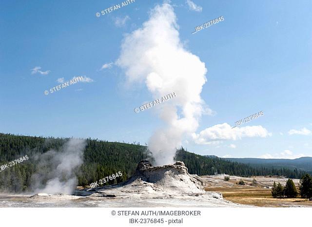 Hot spring with a cone geyser, steam column, water vapor, Castle Geyser, Castle-Grand Area, Upper Geyser Basin, Yellowstone National Park, Wyoming