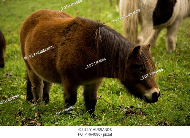 Pony standing on grassy field