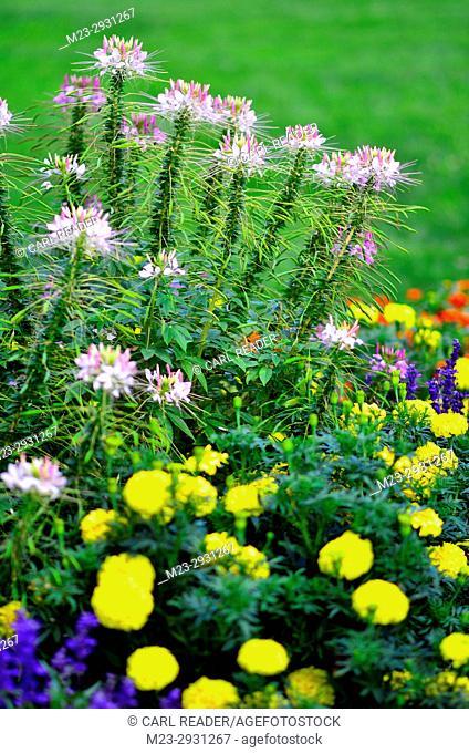 A flower garden in soft focus, Pennsylvania, USA