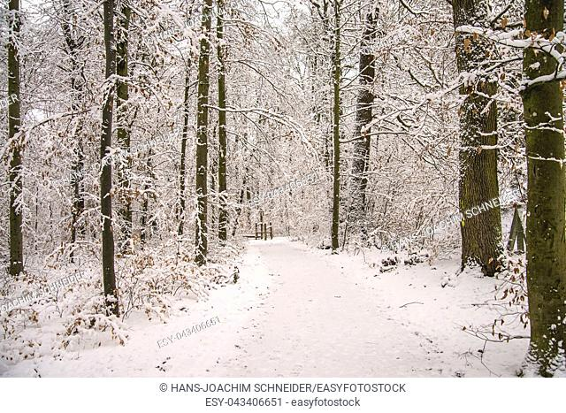 forest with snow in deep winter in Germany
