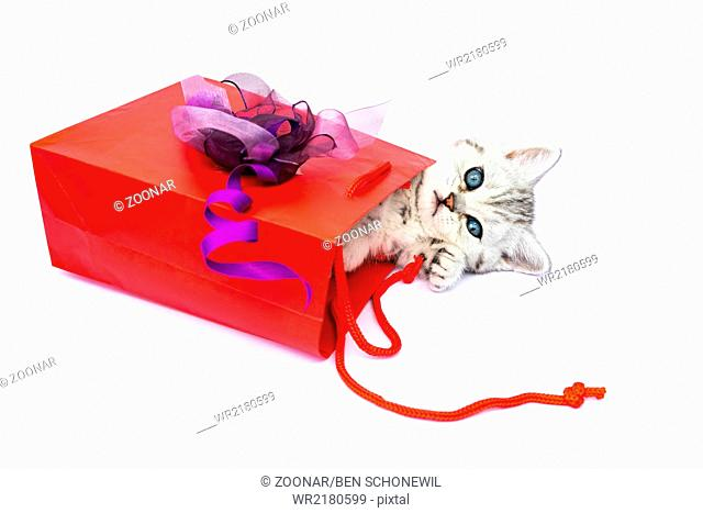 Young cat lying in red bag with decoration