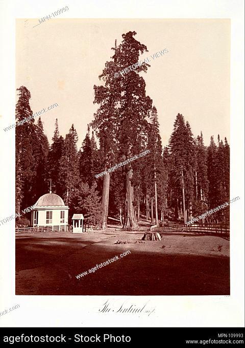 The Sentinel, 315 feet. Artist: Carleton E. Watkins (American, 1829-1916); Date: 1865-66, printed ca. 1876; Medium: Albumen silver print from glass negative;...