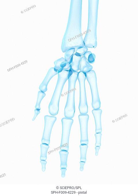 Human hand bones, computer artwork