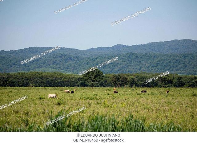 Bodoquena Mountain and Area of Pasture, Corumbá, Mato Grosso do Sul, Brazil