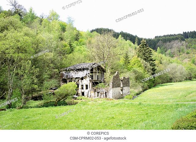 Old wreck house surrounded by trees in forest