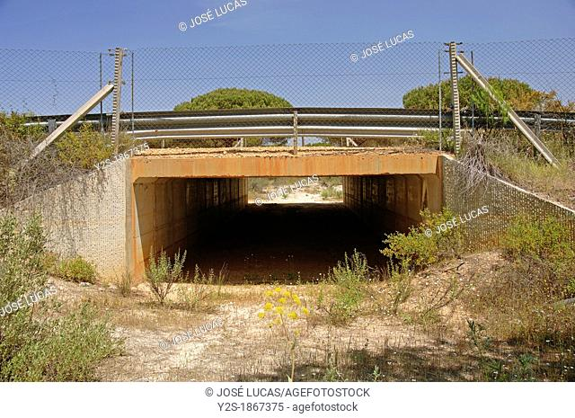 Doñana National Park, Tunnel under the road for wildlife, Huelva-province, Spain