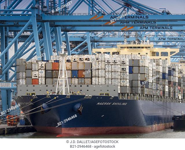 Spain, Andalusia, Cadiz province, Algeciras harbour, Containership