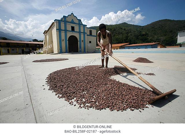Cocoa beans are dried on the village square in Chuao in the Caribbean in Venezuela in South America