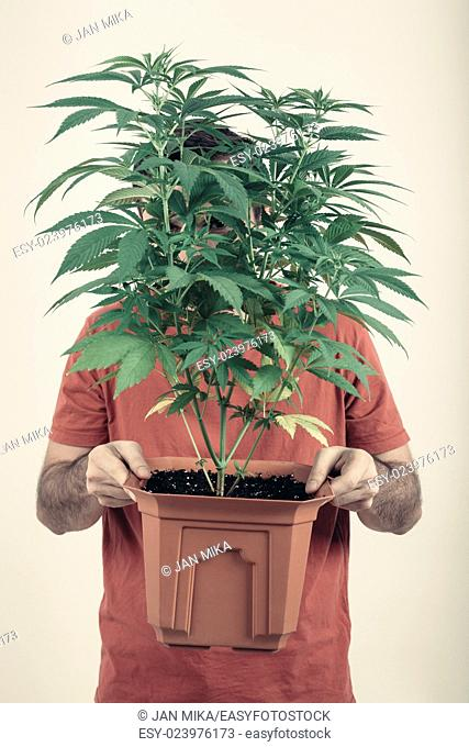 Portrait of a man holding flowerpot with Cannabis plant