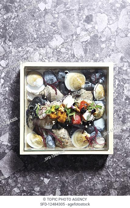 Shell, mussel, scallop, lily and conch