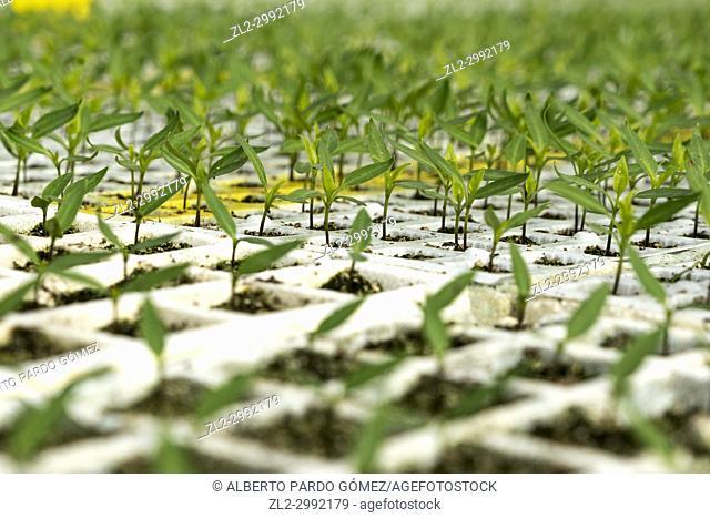 greenhouse plants. Valencia