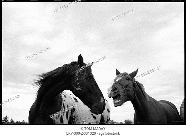 Low angle shot of two horses playing in field
