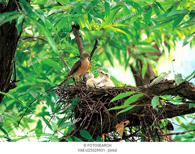 vertebrate, nature, nest, bird, animal, film