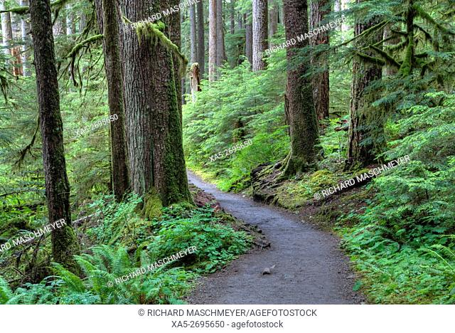 Trail to Sol Duc Falls, Rain Forest, Olympic National Park, UNESCO World Heritage Site, Washington State, USA