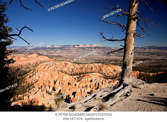 dead tree and colourful rock formations of Bryce Canyon National Park, United States of America, USA